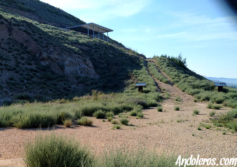 Yacimiento Arqueológico del Cabezo Redondo